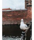 чайка на фоне замка
