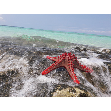 Морская звезда на берегу