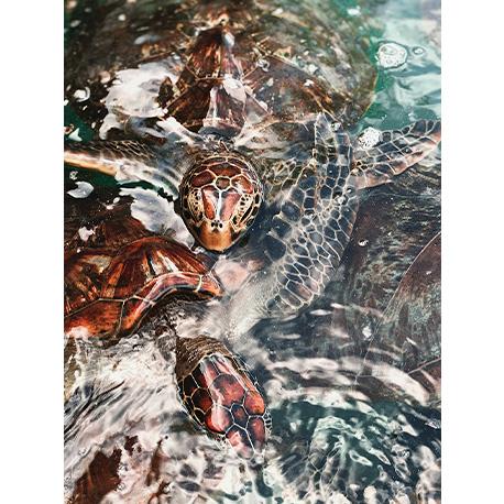 черепахи в океане
