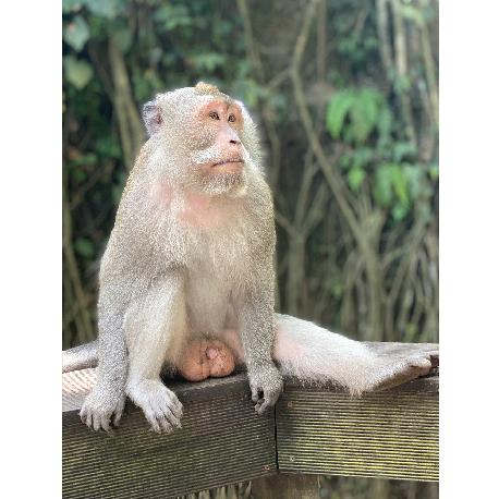обезьяна сидит на балконе в джунглях