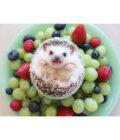 ёжик лежит в тарелке с фруктами