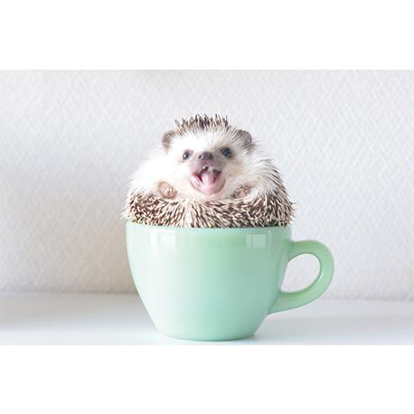 еж сидит в чашке