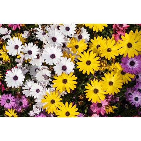 разноцветные цветы на цветочной клумбе
