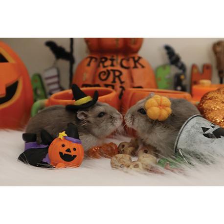 мыша и хомяк а стиле Хеллоуина