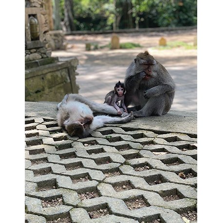 обезьяна, обезьяны
