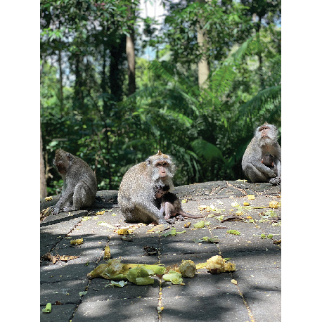 обезьяны обнимают друг друга