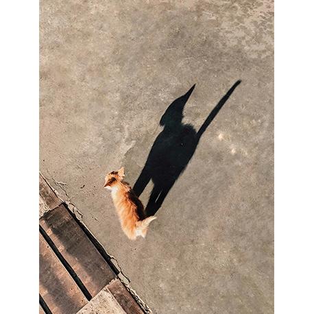 котёнок и тень