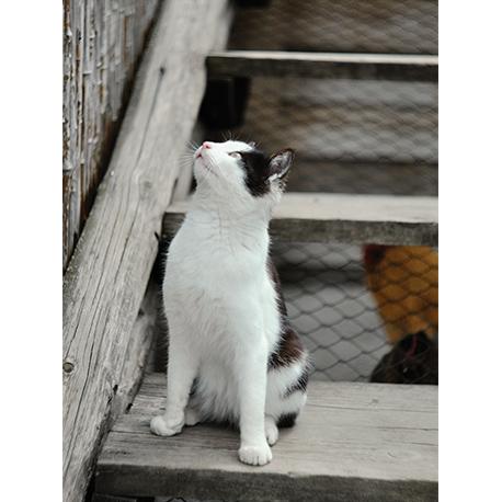 кот сидит на ступенях