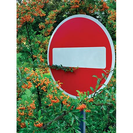 дорожный знак в ветках рябины