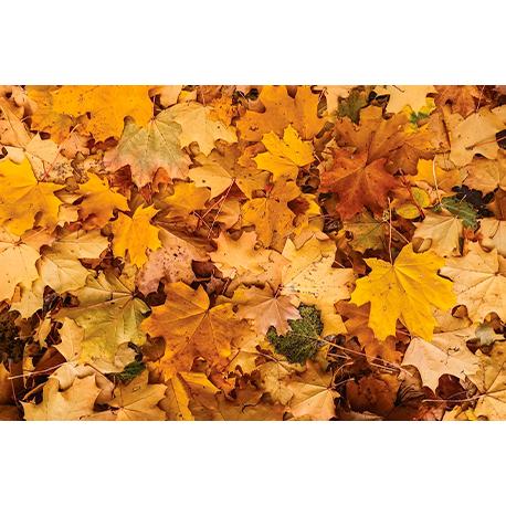 Осенние листья макро