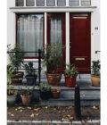 растения на пороге дома