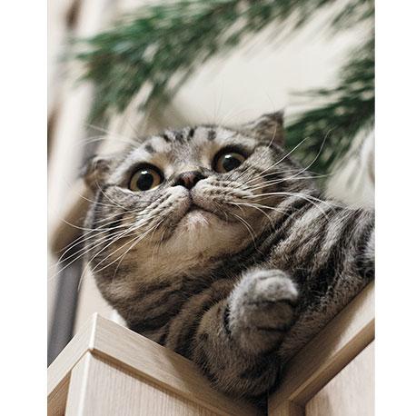 кот показывает лапкой